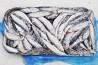 Iwashi herring export from Russia Sankt-Peterburg