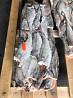 Atlantic haddock fish worldwide delivery from Murmansk Murmansk