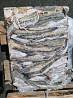 Pollock fish price Alaskan pollock fish product of Russia Vladivostok