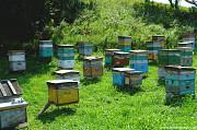 Raw mountain honey export from Russia bee raw honey Sankt-Peterburg