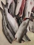 Russian pink salmon 1 grade deep sea salmon Vladivostok