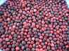 Сranberry Karelian Berries Direct frm Russia Worldwide Delivery Petrozavodsk