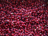 Wild forest berry cranberry from Russian fores worldwide delivery Petrozavodsk