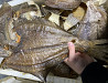 Dry fish from Murmansk export made in Russia good quality any values wholesale supply Murmansk