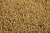 Soy beans Russia agro export beand cereals best quality worldwide delivery Sankt-Peterburg