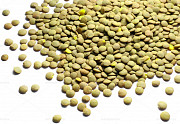 Lentils wholesales from Russian Manucactures best quality Sankt-Peterburg